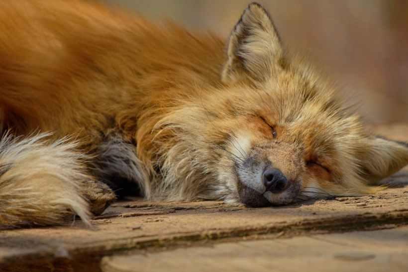 adorable animal canine carnivore