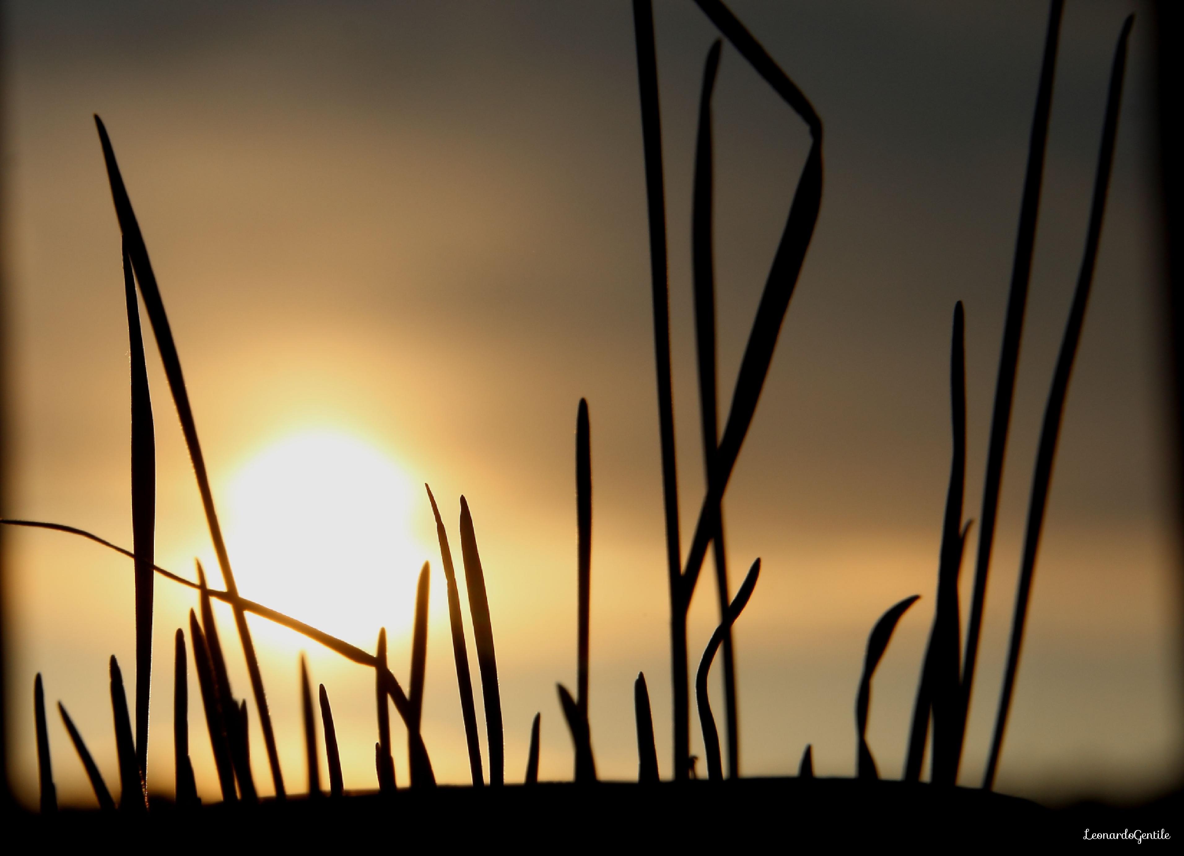 grano e sole_Fotor